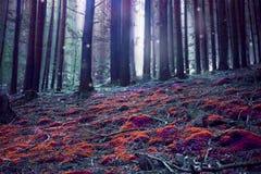 Surreal magic fantasy forest Stock Photos