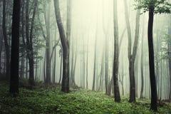 Surreal magisch hout met mist royalty-vrije stock fotografie