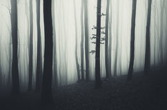 Surreal mysterious forest with fog on Halloween Stock Image