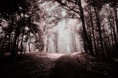 Surreal haunted forest in infrared light Royalty Free Stock Photos