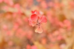 Yellow-pink  shrubs with motley artistic bokeh Stock Images