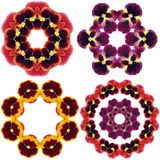 Pansy flower mandalas Stock Photography