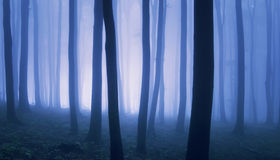 Surreal photo of forest with fog. Surreal photo of forest with blue fog Stock Photos