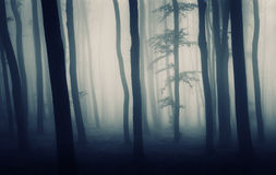 Surreal photo of forest with fog Royalty Free Stock Image