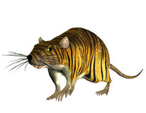 Surreal rat in the tiger look. 3D rendering of a surreal look Tiger in the rat Stock Images