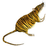 Surreal rat with tiger skin. 3D rendering of a surreal rats with tiger skin Stock Images