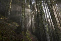 Surreal. Rays beam through the clouds at 4000 feet along the Liumchen Lake Trail, Fraser Valley,BC, Canada Stock Image