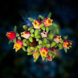 Surreal red, yellow and green flowers Royalty Free Stock Photos