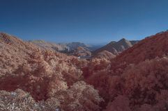 Surreal scene in infrared colors Stock Photos