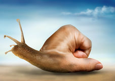 Surreal snail. With a hand for a shell Stock Image