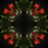Surreal square pattern - red roses on a black background stock photo