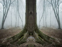 Surreal symmetrical tree in a forest with fog and frost Royalty Free Stock Photos
