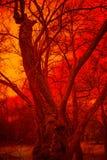 Surreal Tree Stock Photography