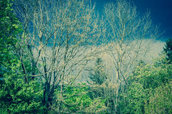 Surreal trees Stock Photos