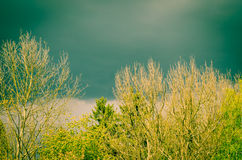 Surreal trees. With dramatic sky filtered effect stock photos