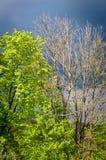 Surreal trees Royalty Free Stock Photos