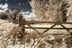 Surreal vibrant alternative colour infrared English countryside Stock Image