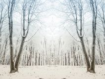 Surreal winter forest scene Stock Photography