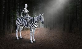 Surreal Woman Riding Zebra, Nature, Woods. Surreal striped woman riding a zebra in the woods or forest. Abstract concept for nature, peace, hope, love, and stock photography