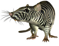 Surreal Zebra rat Stock Photo