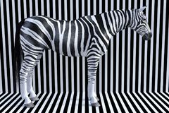Surreal Zebra Stripes, Wildlife Animal, Nature Stock Image