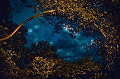 Surreale Ansicht durch eine goldene Hecke Stockbild