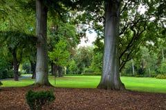 Surreale Bäume in Prag Lizenzfreie Stockbilder