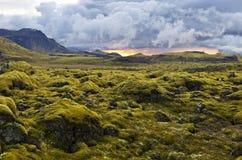 Surreale Landschaft mit wolligem Moos bei Sonnenuntergang in Island Stockfotos