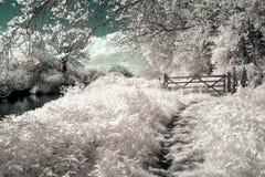 Surreale vibrierende alternative Farbenglische Infrarotlandschaft stockfotografie