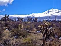 Surreale Wüste Stockbilder