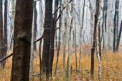 Surrealer nebeliger Wald Stockfotos