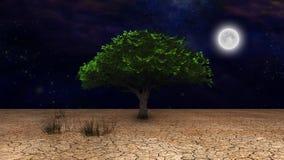 Life. Surrealism. Green tree in arid land. Full moon in night sky Royalty Free Stock Photos