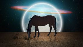 Horse in the moonlight. Surrealism. Horse grazes in arid land. Giant moon at the horizon royalty free illustration