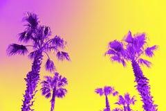 Surrealism. Palms on the boulevard. Surrealism. The palms on the boulevard are bright purple Royalty Free Stock Photography
