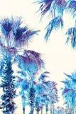Surrealism. Palms on the boulevard. Surrealism. The palms on the boulevard are bright purple Royalty Free Stock Image