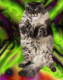 Surrealistic  cat dance and jump. Surrealistic  cat in sunglasses dance and jump Royalty Free Stock Photos
