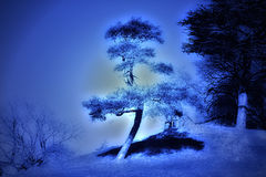 Surrealistic tree in blue light. Stock Photos
