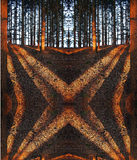 Surrealistyczna czerwień ocienia w lesie przy zmierzchem zdjęcie royalty free