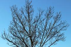 Surrealistyczny drzewo w zimie zgłębia niebieskie niebo Obrazy Stock