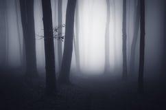 Surrealistyczny las z mgły synkliny drzewami przy nocą Fotografia Royalty Free