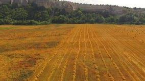 Surret flyger över fältet, rader av skördat vete och baler av hö lager videofilmer