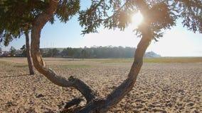 Surret flyger till och med de härliga bisarra flätade samman träden stock video