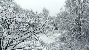 Surret stiger nära snöig träd i vinter parkerar upp stock video