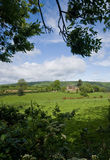 Surrey Countryside at Wotton. Pleasant rural Surrey countryside england Royalty Free Stock Photography