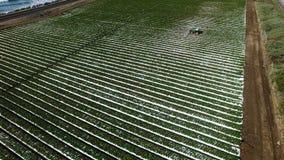 Surrflyg över kolonifält med traktoren som bevattnar det nära huvudvägen och kusten av Stilla havet lager videofilmer