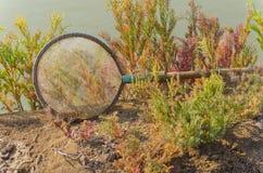 Surround сетки seablite (maritima Suaeda) Селективный фокус Стоковое фото RF