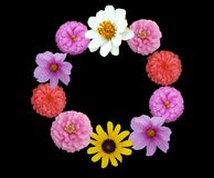 Surround själv vid blommor Fotografering för Bildbyråer