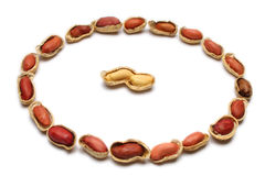 Surrounded. Peanut couple surrounded by a circle of single peanuts Royalty Free Stock Images