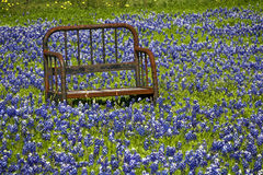 Rusted Seat Frame in Field of Blue Bonnets. A rusted bench is surrounded by a field of bluebonnets in Texas Stock Photo