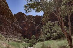 The walk into Catherdral Gorge, Purnululu, National Park. Surrounded each side by towering banded cliffs the walk during the Wet season can be difficult due to stock photos